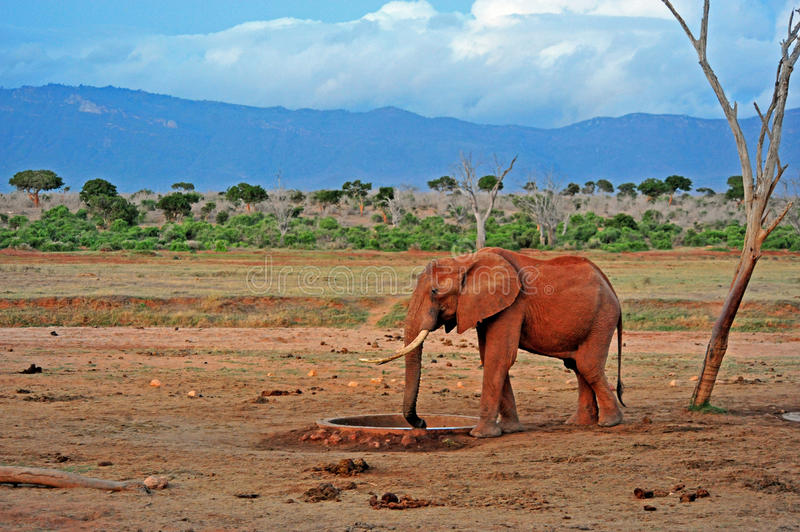 Download African Elephant Royalty Free Stock Image - Image: 26640756
