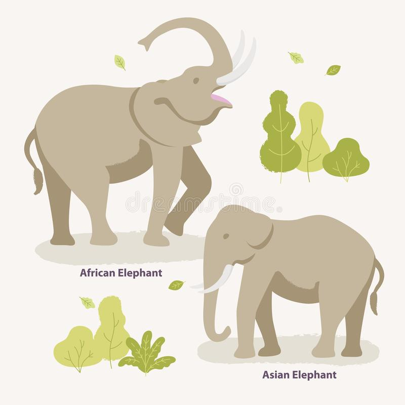 African Elephant and Asian Elephant walking in the zoo, park vector flat illustration. Kinds of elephants infographic. Elements isolated on light background stock illustration