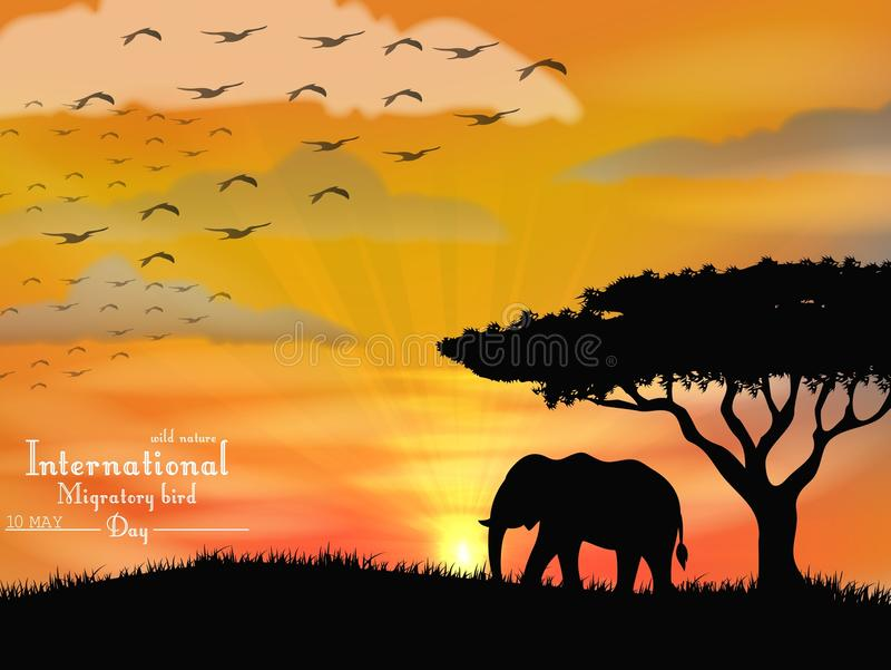 African elephant with flying birds on sunset sky. Illustration of African elephant with flying birds on sunset sky vector illustration