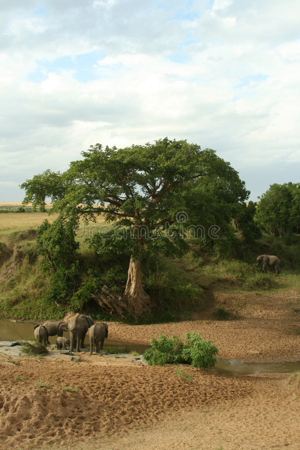 Download African elephant landscape stock photo. Image of grey - 7574728
