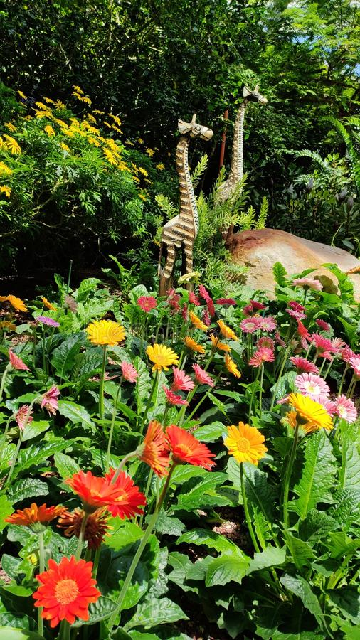 African giraffe wooden statues with flowers and plants. Two statues of african giraffe kept in middle of flowers and plants stock photo
