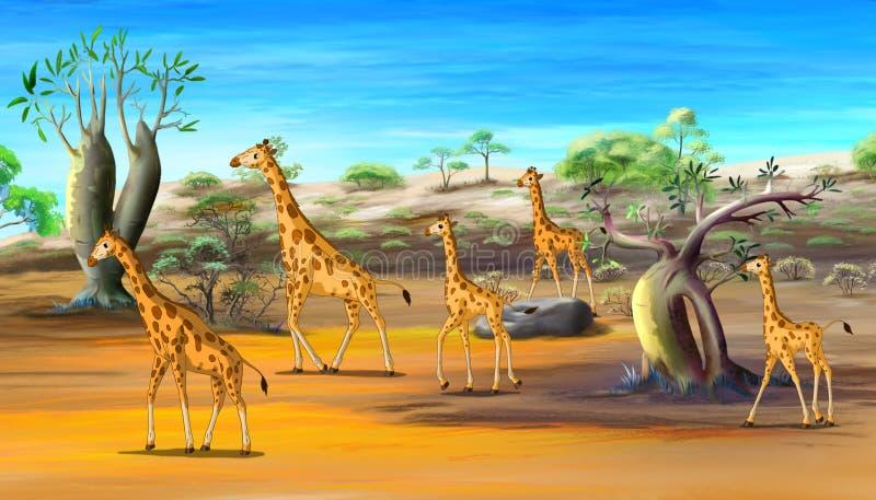 African Giraffes Family Walking at the Savannah vector illustration