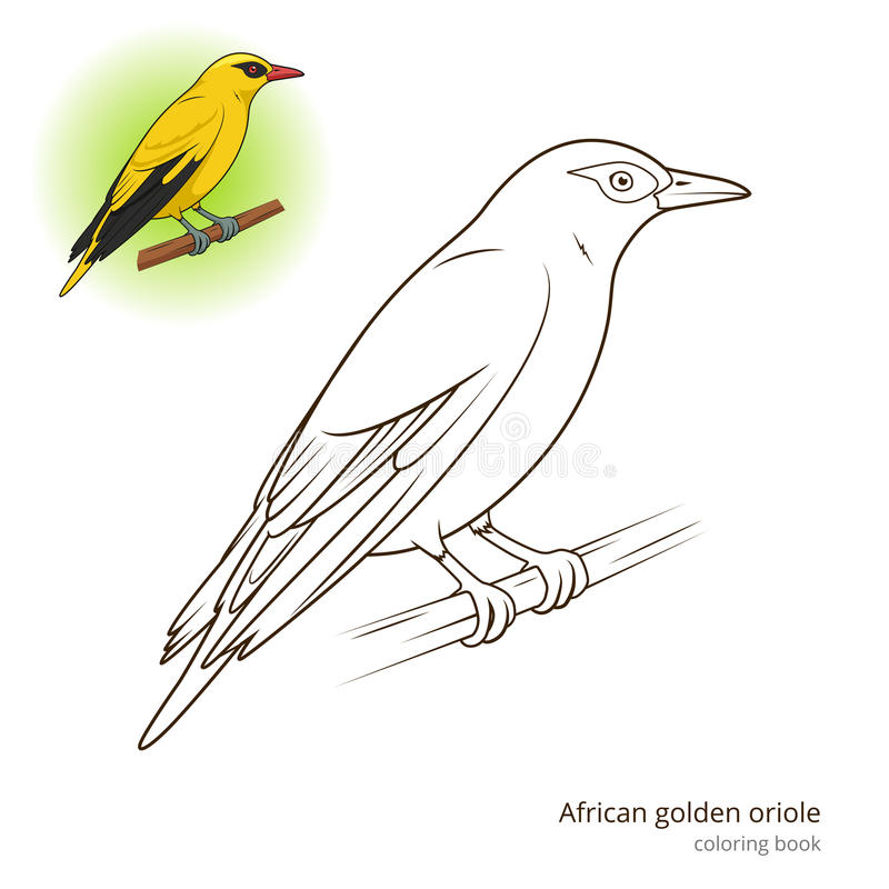 African Golden Oriole bird coloring book royalty free illustration