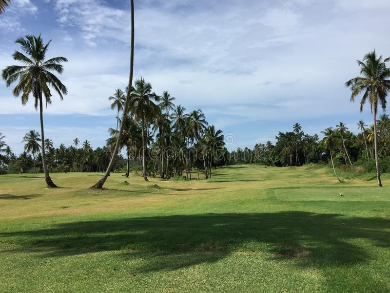 African golf course with palm trees lining the fairway stock photos