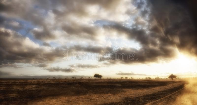 African Grassland stock photography