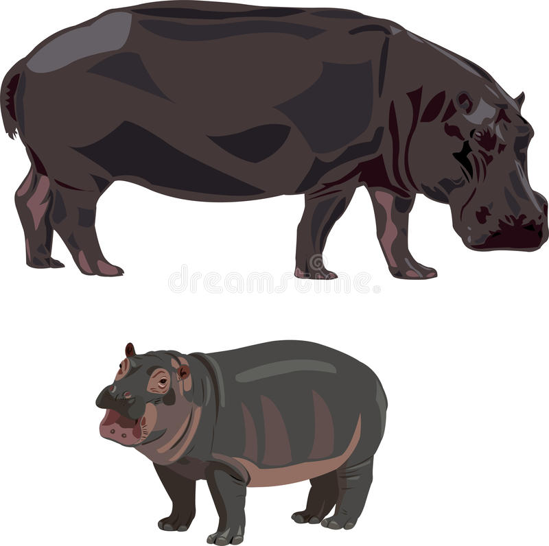 Download African hippos stock photo. Image of tall, hunting, land - 17587738