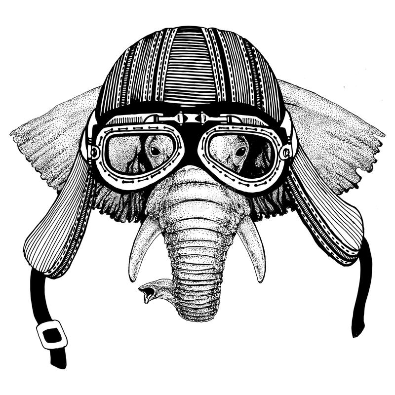 African or indian ElephantHand drawn image of animal wearing motorcycle helmet for t-shirt, tattoo, emblem, badge, logo. African or indian Elephant Hand drawn stock images