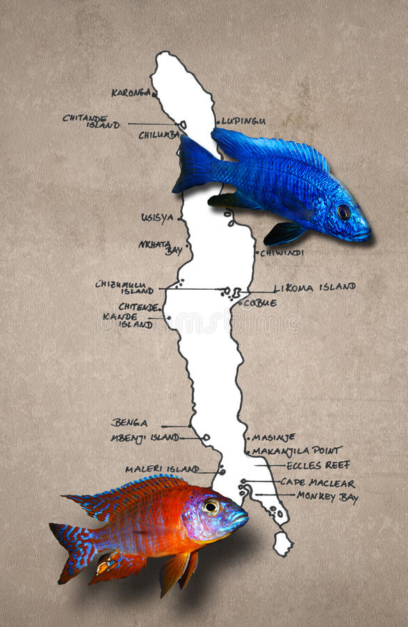 Download African Lake Malawi Map With Fishes Stock Illustration - Image: 22347544