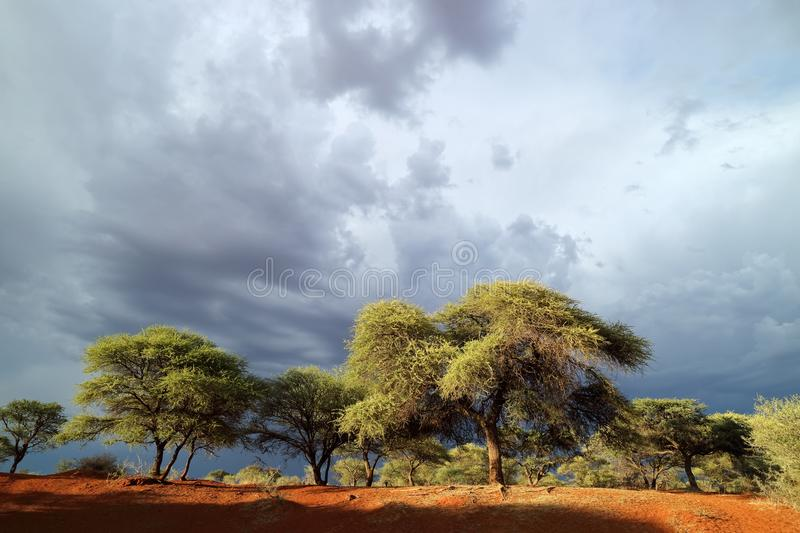 African landscape against a stormy sky stock photos