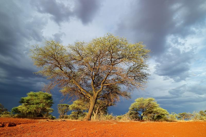 African landscape against a stormy sky royalty free stock image