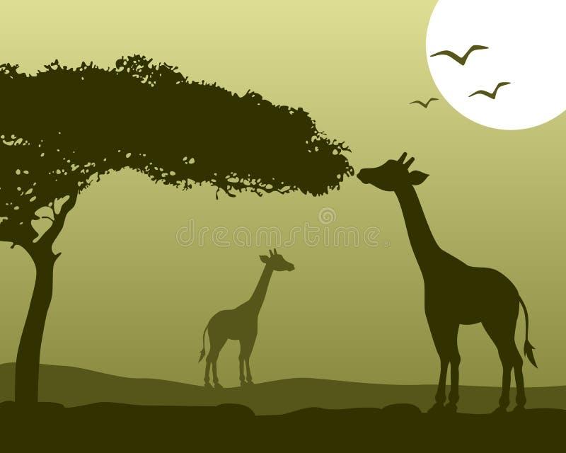 African Landscape & Giraffes stock illustration