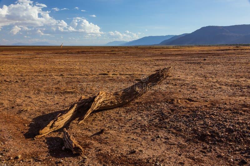 Download African Landscape View Of Manyara Lake In Dry Season Stock Image - Image: 35579115