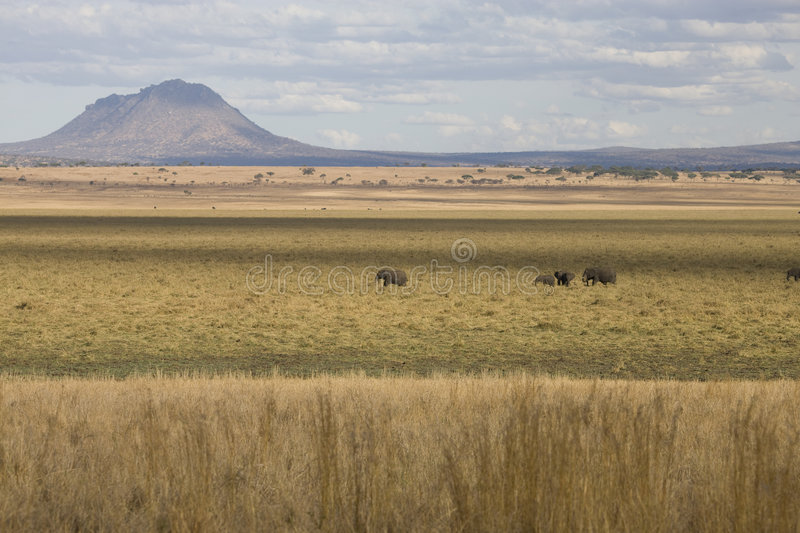Download African Landscape With Volcano And Elephants Stock Image - Image: 8081637