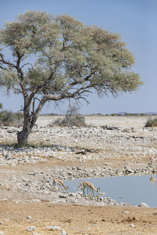 African landskape royalty free stock images