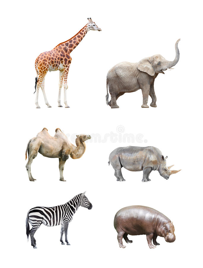 African mammals. stock images