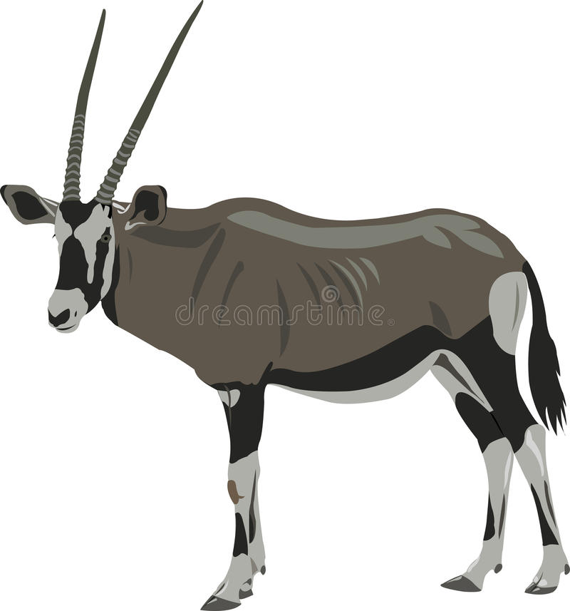 African oryx. Africa's largest antelope is a beautiful herbivores royalty free illustration