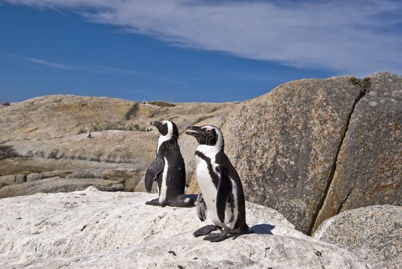 Download African penguins on rock stock image. Image of rock, descent - 4602903