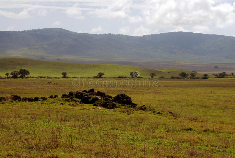 African Plains. A photograph of the African Plains in the Ngorongoro Crater, Tanzania stock photography