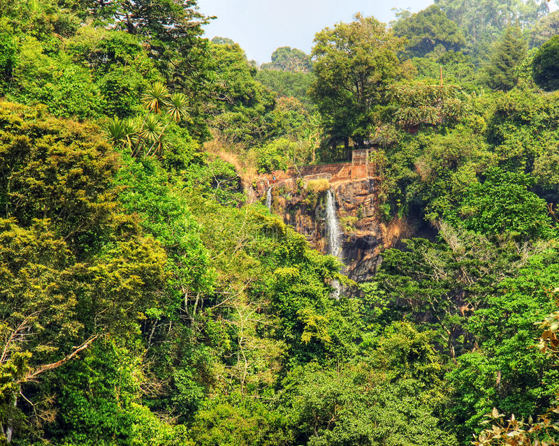 Download African Rainforest Stock Photo - Image: 39218976
