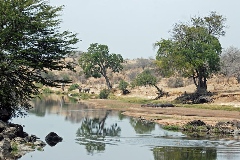 African river landscape reflecting in water. African river landscape reflecting in the water with trees, elephants, hippos - Ruaha River - Ruaha National Park royalty free stock photography
