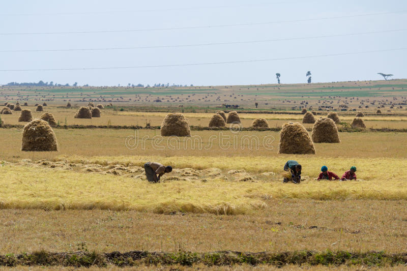 African rural life and farmland stock photography