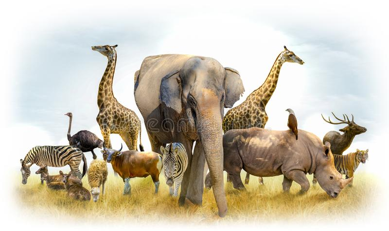 African safari and Asian animals in the theme illustration, filled with many animals, a white border image royalty free stock images