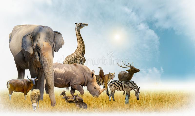 African safari and Asian animals in the theme illustration, filled with many animals, a white border image royalty free stock photos