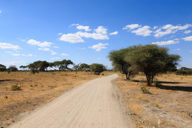Tarangire National Park landscape, Tanzania, Africa. African safari. Dirt road in Tarangire National Park , Tanzania landscape, Africa stock image