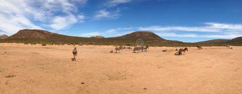 African safari stock image