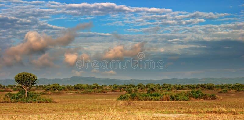 African savanna stock image