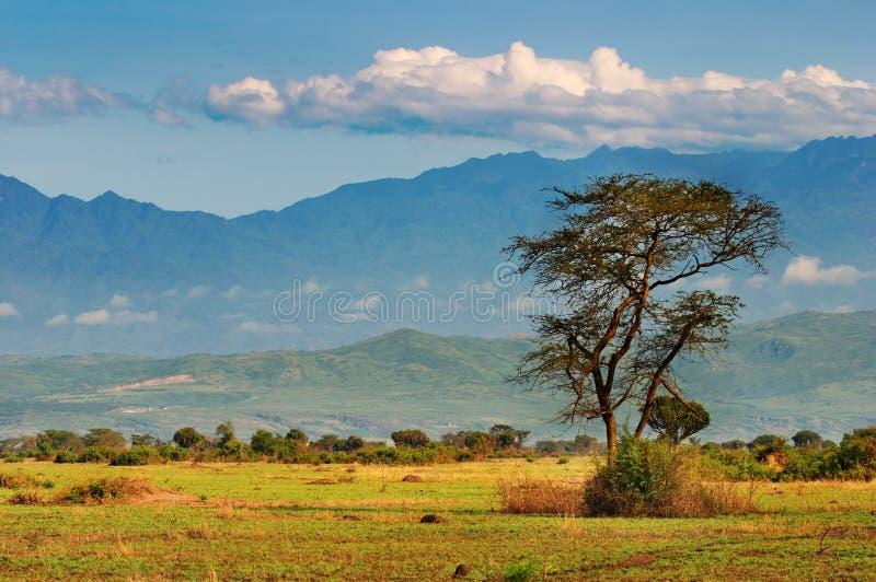 African savanna. And Rwenzori Mountains, Queen Elizabeth N.P., Uganda stock photo