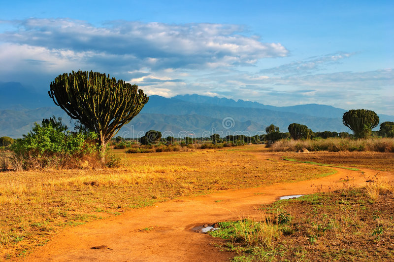 African savanna. Queen Elizabeth National Park, Uganda royalty free stock image