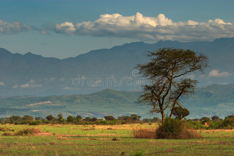 African savanna stock photography