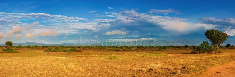 African savanna. And Rwenzori Mountains, Queen Elizabeth N.P., Uganda stock photos