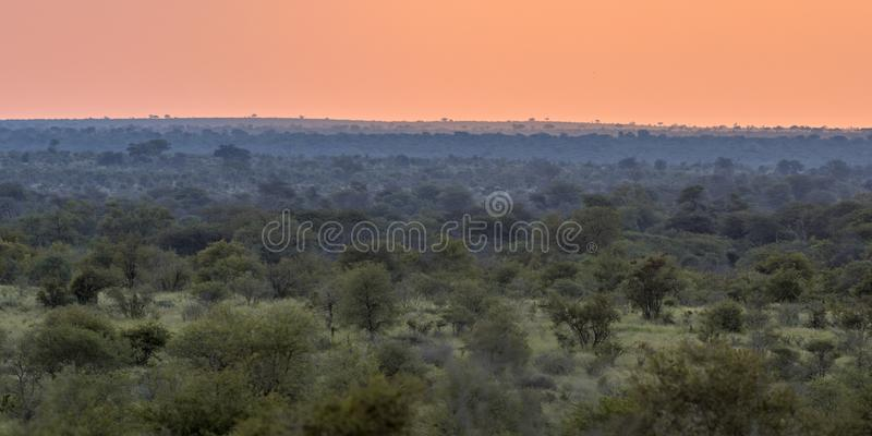 African Savanna plain overview at sunset stock photography
