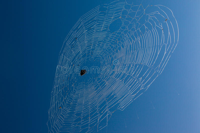 Download African Spider Web Blue Sky Stock Photo - Image: 26372026