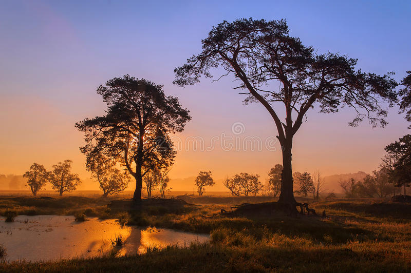 Download African Sunrise Stock Photo - Image: 42174025