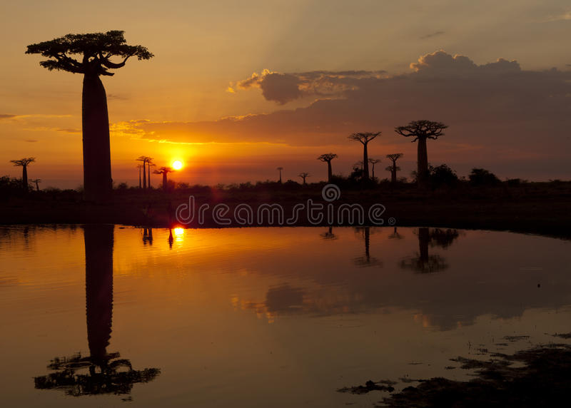 Download African Sunset Stock Image - Image: 27761251