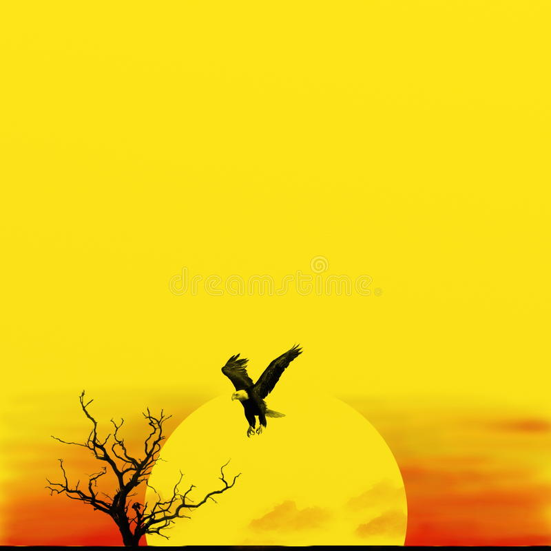 African sunset with eagle royalty free stock photography