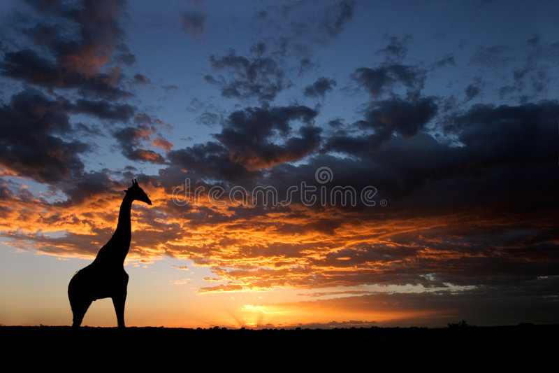 African sunset landscape stock images