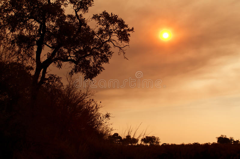 Download African Sunset On The Savanna Plains Stock Photo - Image: 24081842