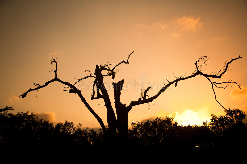 Download African Tree Royalty Free Stock Images - Image: 28142549