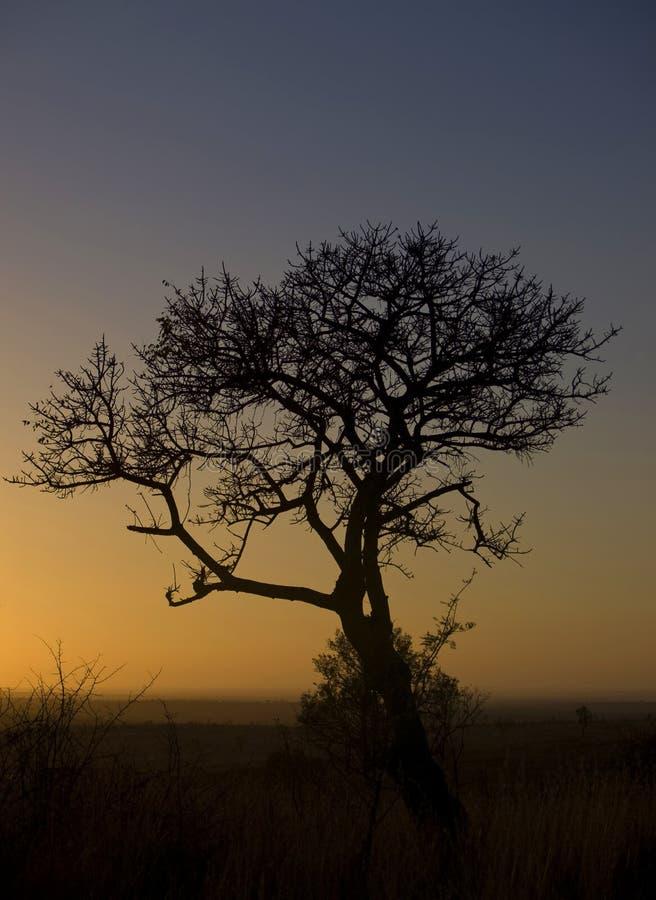 African tree at sunrise