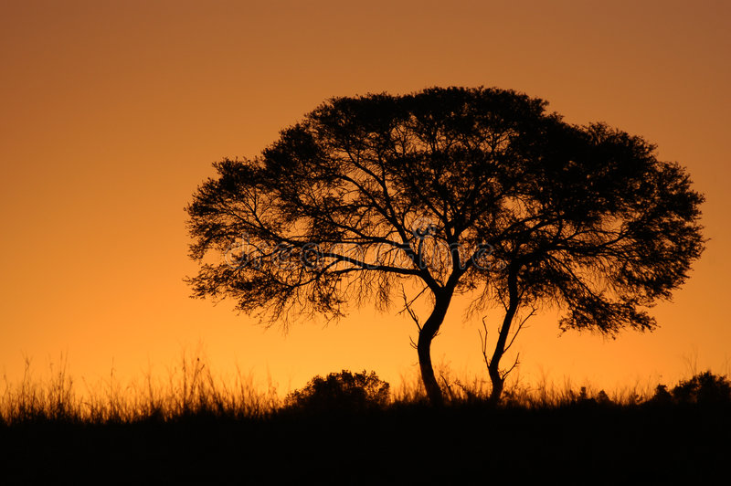 African Tree Sunset Silhouette stock images