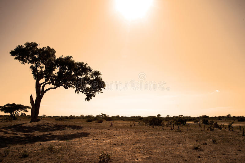 Sunset in Africa royalty free stock image