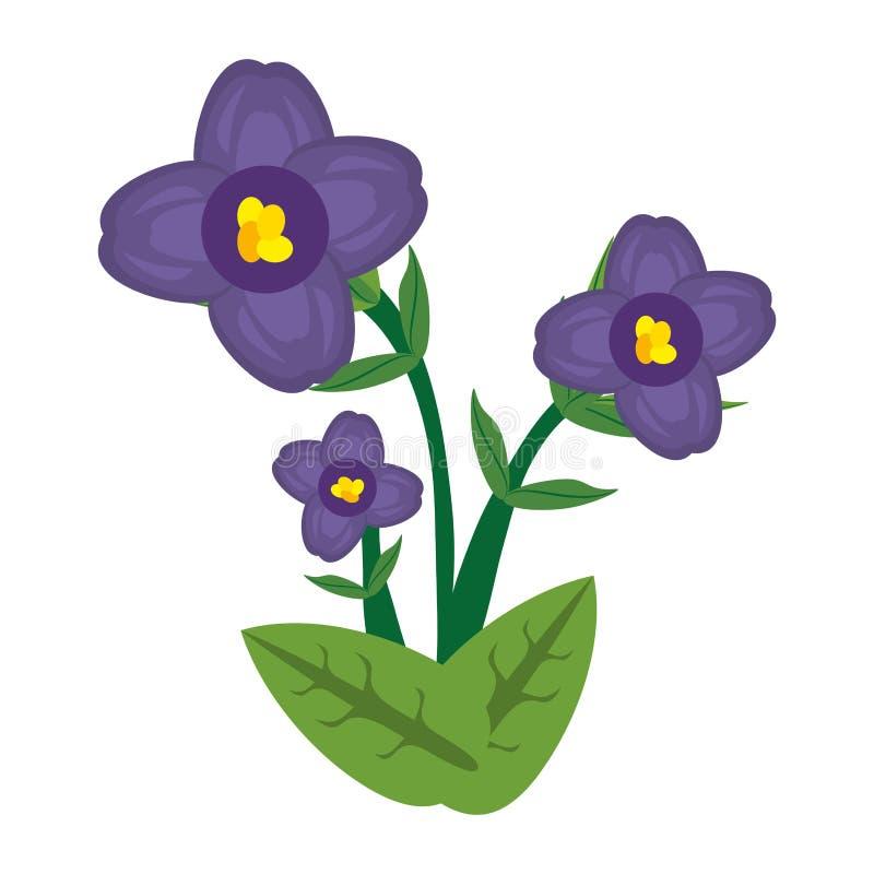 african violet flower image vector illustration