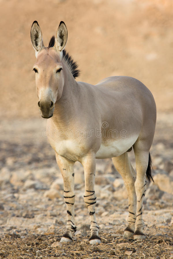 Free African Wild Stock Photography - 10430092