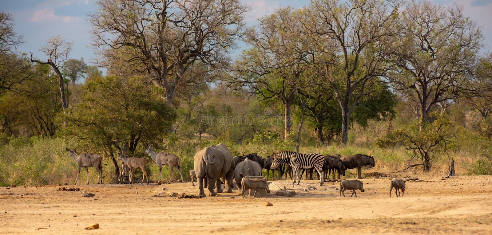 African wildlife assortment with various animals in South Africa stock photography