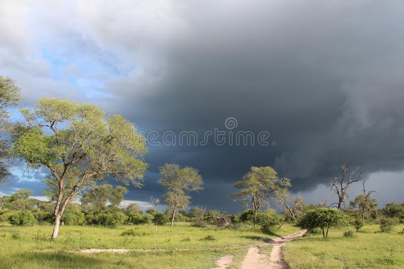African Wildlife - Storm - The Kruger National Park. African Wildlife - Thunder storm- The Kruger National Park. An approaching African thunder storm in the bush stock photo