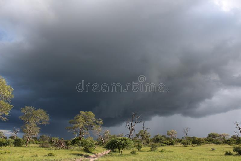 African Wildlife - Storm - The Kruger National Park. African Wildlife - Thunder storm- The Kruger National Park. An approaching African thunder storm in the bush royalty free stock image